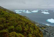 """Bilim İnsanları: """"Antarktika'da Buzlar Eridikçe Toprak Yeşilleniyor!"""""""