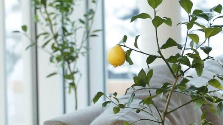 Evde ve Ofiste Kolayca Çoğaltıp Yetiştirebileceğiniz Bitkiler