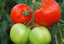 Türkiye'den Rusya'ya domates teklifi