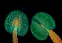 Kendi Beyinlerini Geliştiren Bitkiler Keşfedildi!