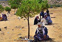 Manisa'da köylüler çam ağaçları için nöbet tutuyor