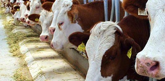 Kurbanlık hayvan fiyatlarına bakanlık tedbiri