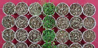 Kuraklığa Karşı Dirençli Bitki Yetiştirmek İçin Bakın Ne Kullanılıyor