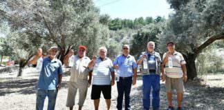 """50 bin zeytin ağacı """"tuzak şişe"""" yöntemle kurtarıldı"""