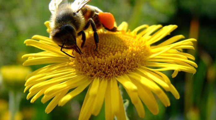 Bitkiler İçin Ev Yapımı Doğal Böcek İlaçları Nasıl Yapılır?