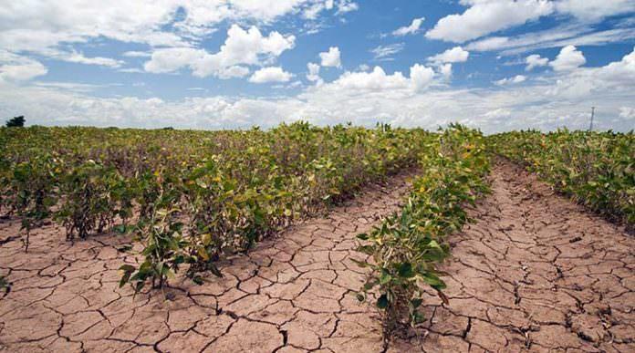 İklim Değişikliği 4 Hayati Ürünün Küresel Verimini Azaltacak