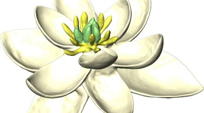 Yeryüzündeki İlk Çiçeğin Nasıl Göründüğünü Artık Biliyoruz!