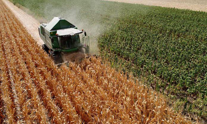 Beyaz et sektörü büyüdü, mısır üretimi arttı