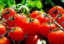 """Rus heyet """"domates ihracatını"""" görüşmeye geliyor"""