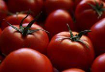 Rusya'dan domatese yeşil ışık