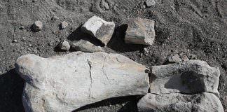 Kayseri'de Yaşayan Çoban, Milyon Yıllık Fosil Buldu!
