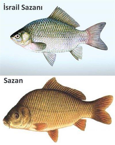 'Etçil balıklar dengeyi bozdu'