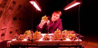 Yerin 30 metre altında topraksız tarım ile sebze üretiyorlar!