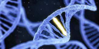 DNA'nın Nasıl 'Düzenlendiği' Canlı Olarak İlk Kez Görüntülendi!