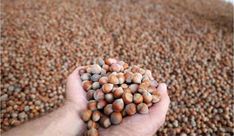 İki ayda 66 bin ton fındık ihraç edildi