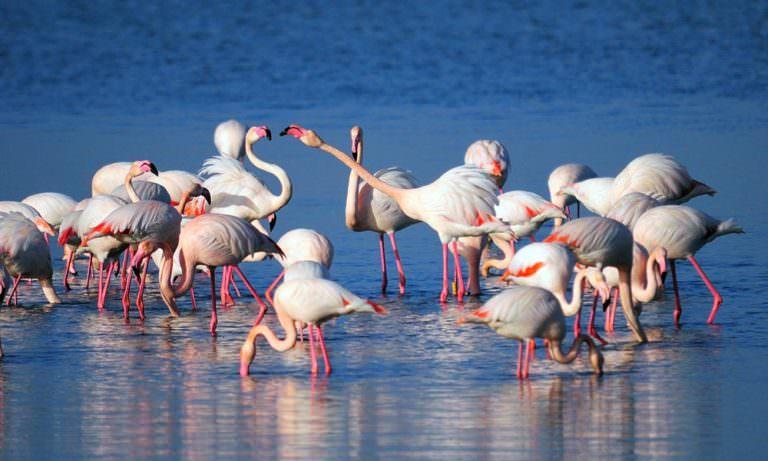 Konya'da Flamingo katliamı