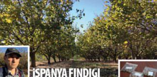 Röportaj: İspanya Fındığı Nasıl Yetiştiriyor?