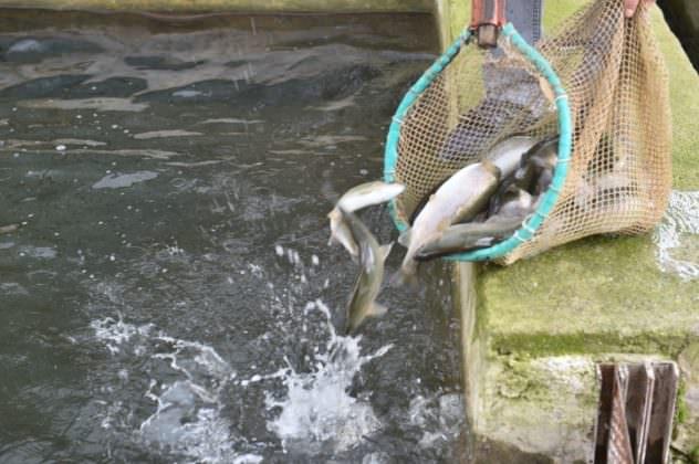 Su Ürünleri Yetiştiriciliği Desteklerle Güçleniyor