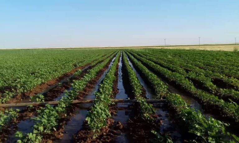 Çiftçinin kazancı suya gidiyor