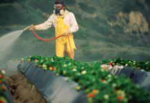Pestisit Analizinde Maksimum Sınırı Aşan Gıdalar Var