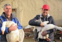 Kaz yetiştiriciliği Orada 3 yıldır Dededen Toruna Sürüyor