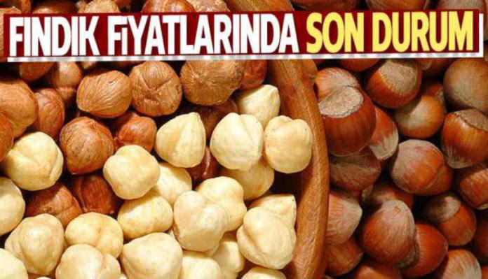 Giresun'da Fındık Fiyatları Tavan Yaptı !