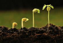 Tarım ve Orman Bakanlığı Ar-Ge Destek Programı 15. Proje Çağrısı (2019)
