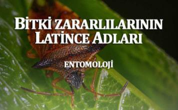 Bitki Zararlılarının Latince ve Türkçe İsimleri Nedir?