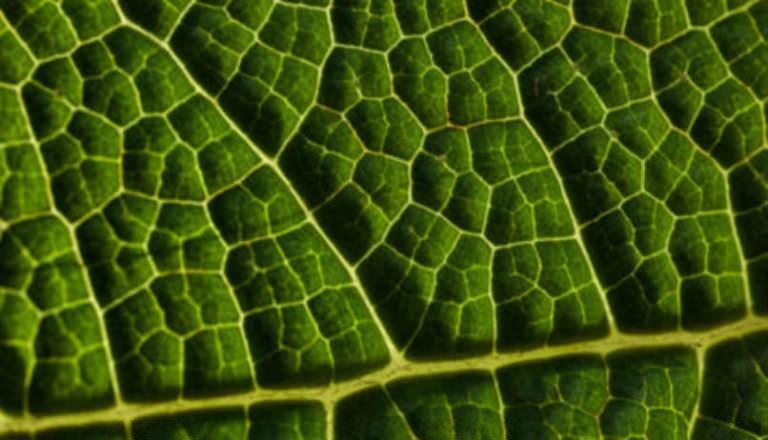 Fotosentezdeki kusurlar düzeltilerek gıda üretimi büyük ölçüde artırabilir