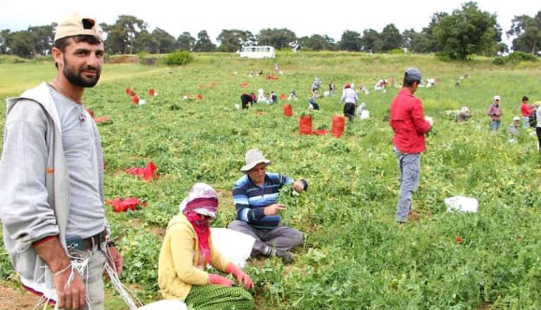 Tarım Bakanlığı Açıkladı : Bilinçli Tarım İçin Mültecilere Eğitim Verilecek