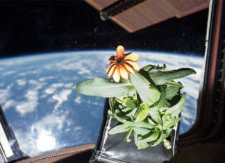 Uzayda Bitki Yetiştirmek Mikro Yerçekimi Araştırmaları İle Mümkün Olabilir