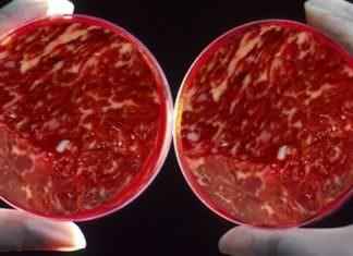 Türkiye, Laboratuvar Ortamında Yapay Et Üretecek