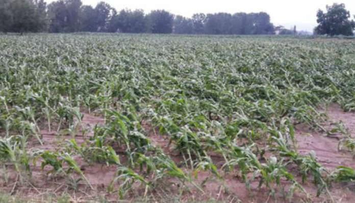 Tarım Sigortaları Havuzu 2018'de Toplam 1,1 Milyar Liranın Üzerinde Ödeme Yaptı