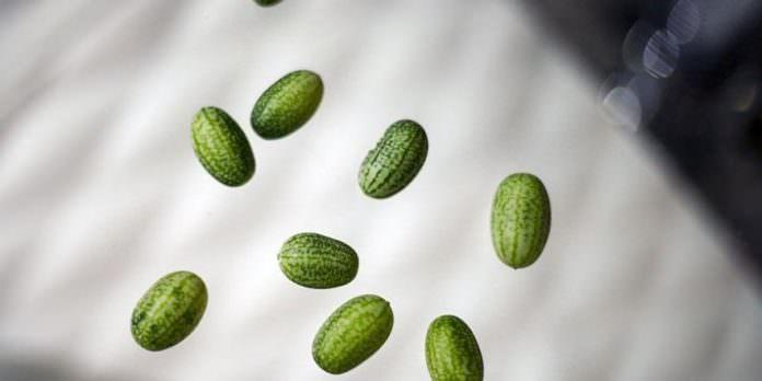 Zeytin büyüklüğünde karpuz