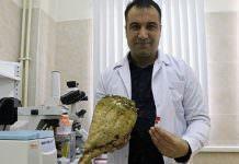 Şeker Pancarı Köklerinden Verimi Artıracak Bakteri Geliştirildi