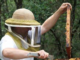 Tarım ilaçları, arıların çiçek tercihini değiştirebiliyor!
