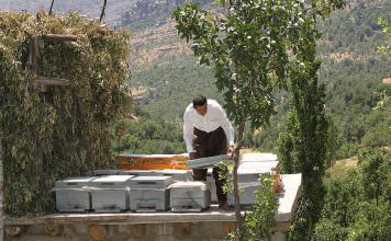 Terörden temizlenen bölge tarım ve hayvancılıkla canlandı.