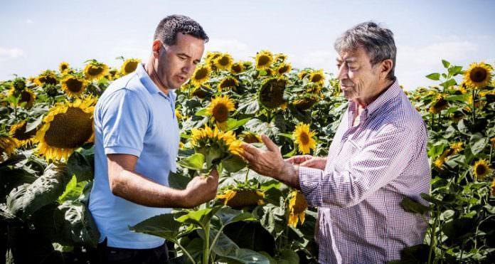 Ayçiçeği tohumu pazarında dev işbirliği!