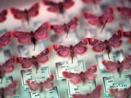Böceklerin Yarısının Nesli Tükenmek Üzere