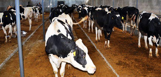 Hayvancılıkta verimli üretime destek