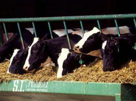 Veteriner Hekimlerden canlı hayvan ithalatı açıklaması