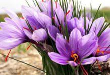 Tıbbi ve aromatik bitkilerin ekonomisi