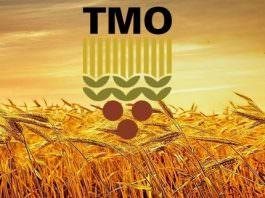 TMO 231 personel alımı yapacak