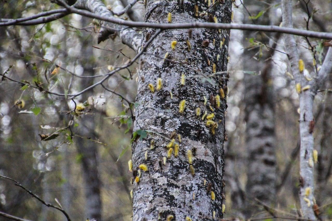 Ağaçlarda yaprak kalmadı...