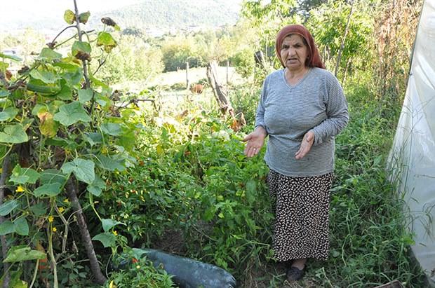 Bahçesine ektiği salatalıklar 1 metreyi geçince paniğe kapıldı