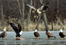 Tehlike Çanları Çalıyor: Son 50 Yılda Bir Kıtada 3 Milyar Kuş Öldü
