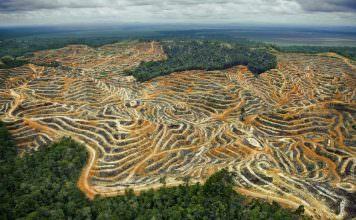Uzmanlar, Ormanların Korkunç Bir Hızla Azaldığını Açıkladı