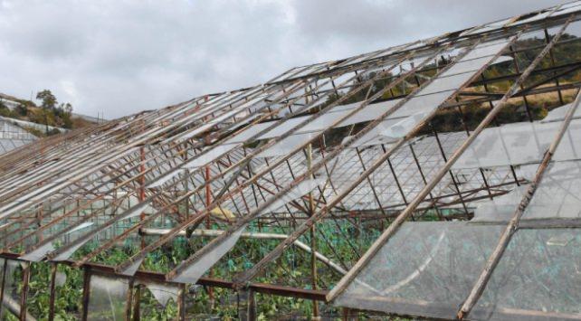Alanya'da sağanak ve fırtına 100 dönüm serayı vurdu