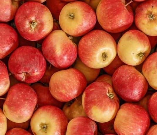 Bozulmayan elma için 10 milyon dolar harcadılar