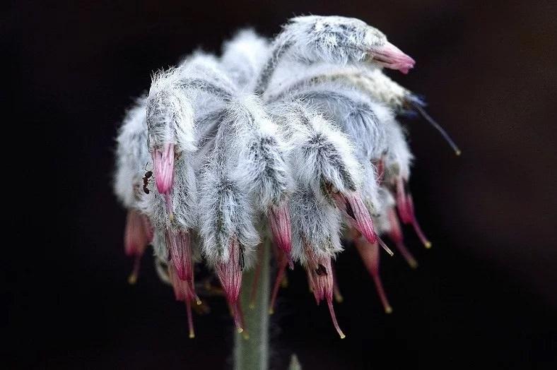 Sadece Denizli'de Yetişen Yeni Bir Bitki Türü Keşfedildi